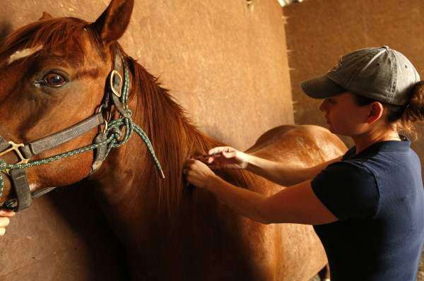 Local vets urge horse owners to vaccinate for West Nile ahead of mosquito season