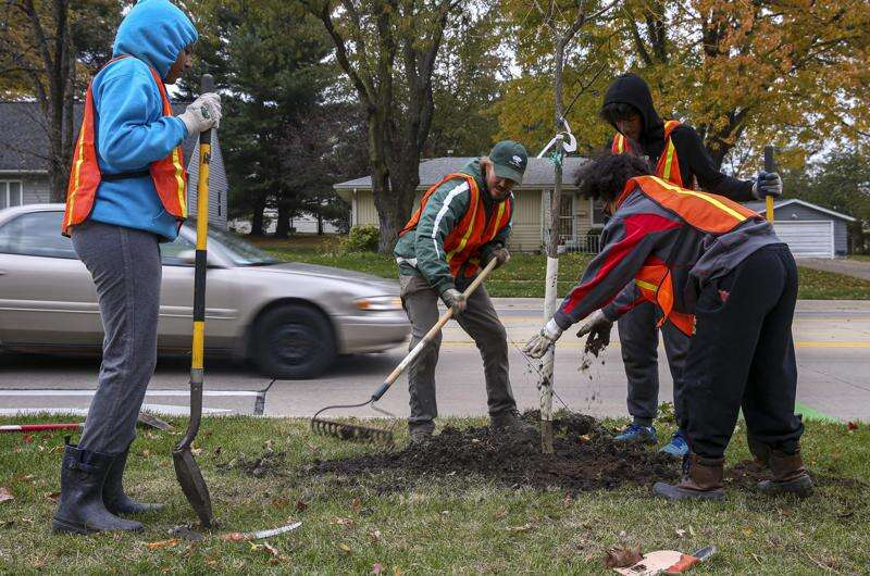 Linn County Tree Equity program breaks barriers to replanting