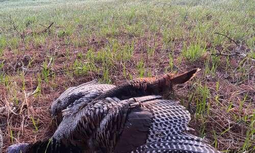 Initial turkey hunt fills all the senses