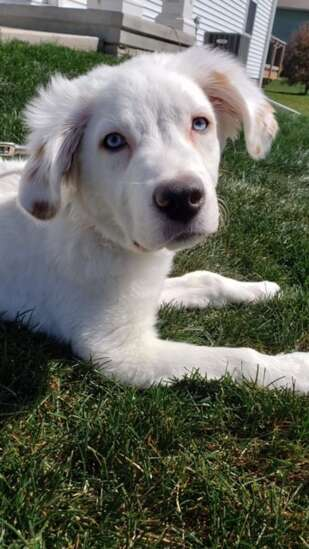 Cedar Rapids man sentenced to 2 years for abuse of puppy