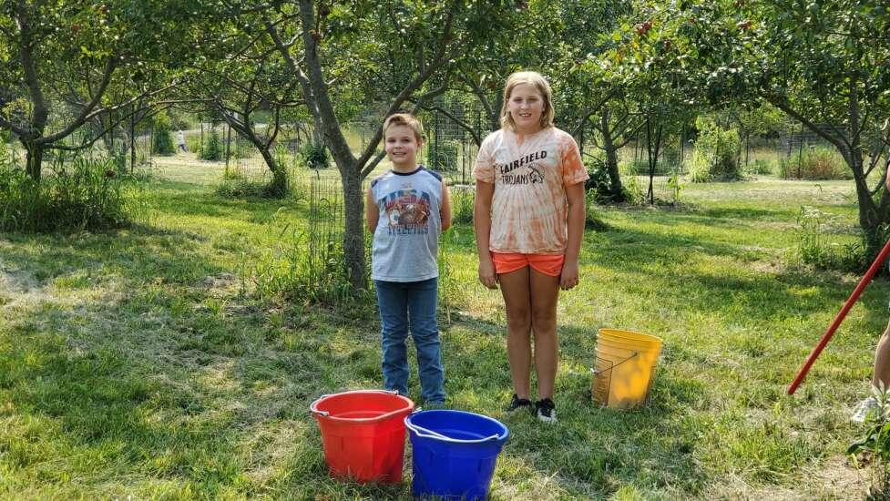 Volunteers pick fruit to help the needy