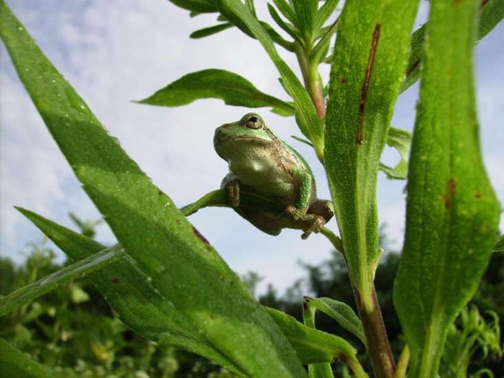 Learn some fun — and weird — frog facts with this quiz