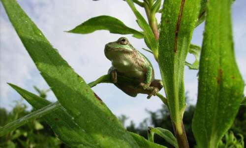 Learn some fun frog facts with this quiz