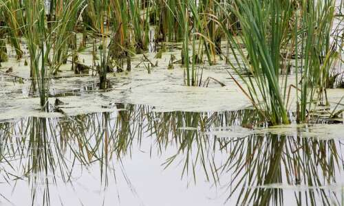 Fewer impaired waters in Iowa, but impaired leadership remains