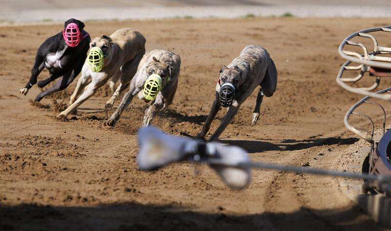 Iowa Greyhound Park sees huge money bet on races despite no fans and no in-state wagers