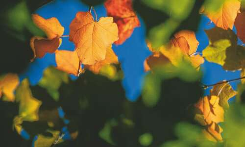 Best places to view fall colors in Eastern Iowa