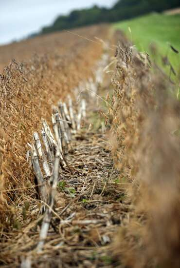 Many Minnesota farmers disagree with buffer mandate