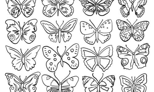 Coloring page: Beautiful butterflies