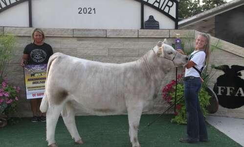 Breeding Beef