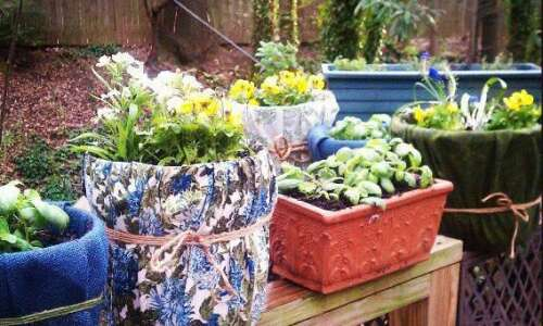 Gardening doesn't have to be expensive