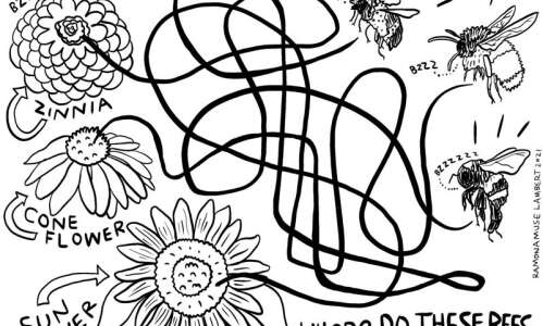Solve the maze: Save the bees, save the world
