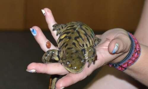 Fairfield residents meet 'animal ambassadors' from Blank Park Zoo