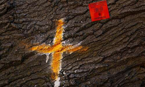 Cedar Rapids marks more trees for removal damaged in derecho