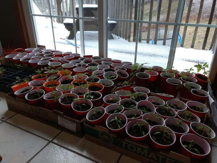 Start your own seeds to get a head start and save money gardening