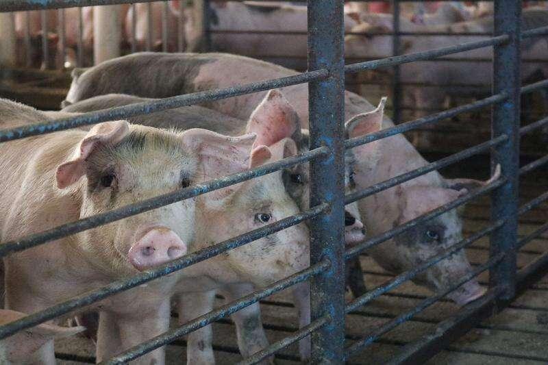 Industry snapshot: pork looks stable despite looming concerns
