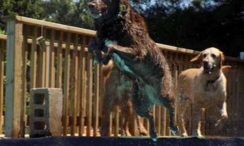 K9COLA's annual doggy dip moving from Bever Pool to virtual…