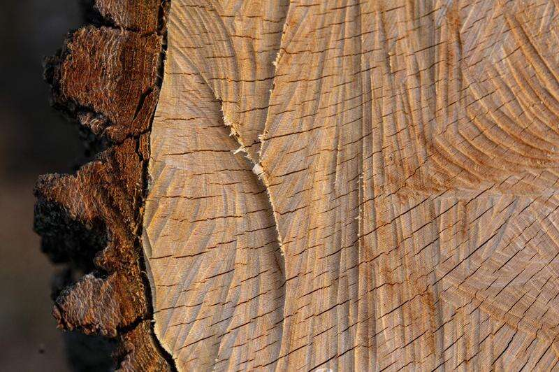 A photographer's tribute to trees lost in the Iowa derecho
