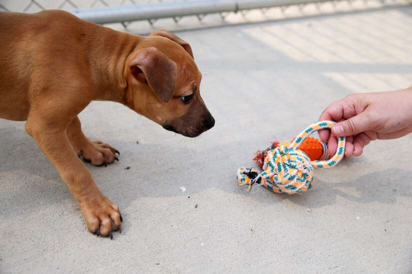 Tougher law 'step in the right direction' for animal abuse cases