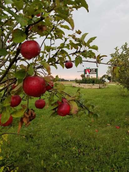 Students invited to 'plant their dreams' — and apple trees — in Mount Vernon