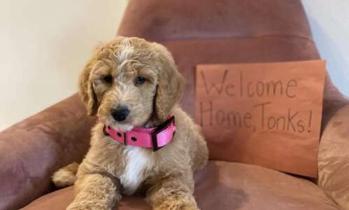 A furry distraction: People adding pets to their family during…