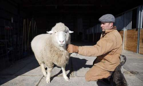 Neglected animals, including two sheep from Cricket Hollow, find safe…