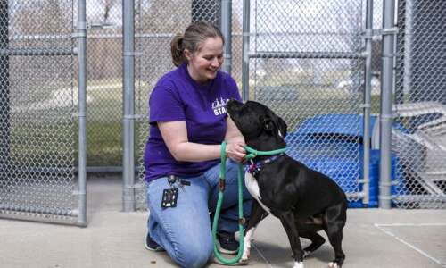 Local animal shelters closed or open by appointment only