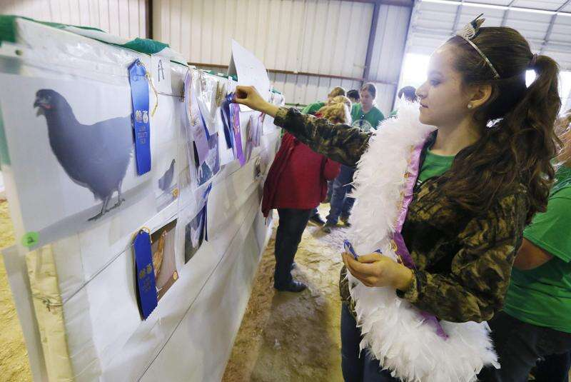At the fair, a picture is worth a thousand clucks