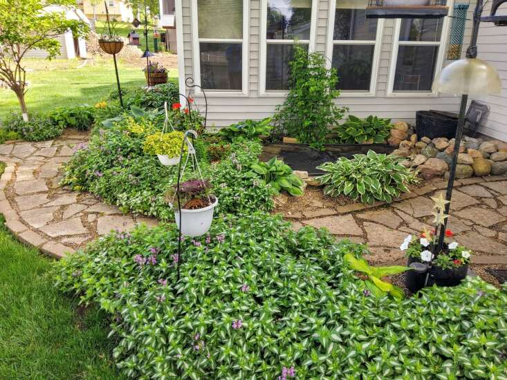 Central City gardener's guide to growing: Plant what you like