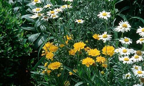 Invasive plants may be welcome in some gardens