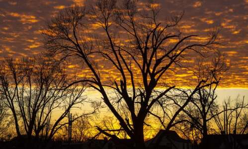 Tree care workshops available starting Monday in Cedar Rapids