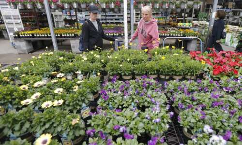 Plant shopping tips for Iowa gardeners