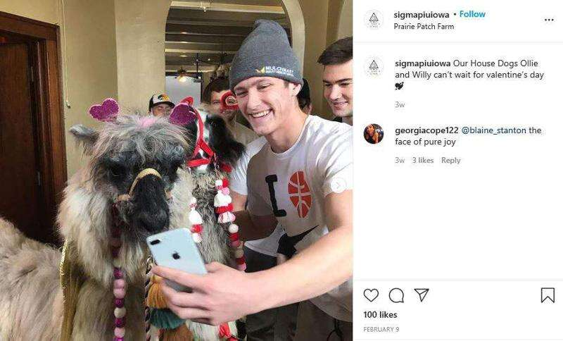 University of Iowa fraternities investigated for hazing, hosting a llama gathering