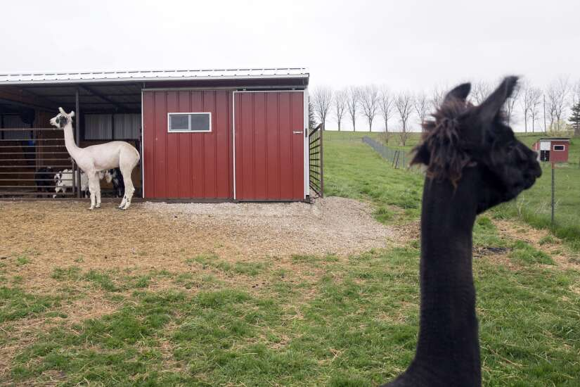 Transforming a dairy barn into a vacation rental Airbnb near Iowa City