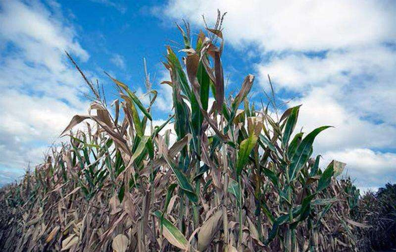 After COVID-19, Iowans and Americans face a bigger challenge: Climate change