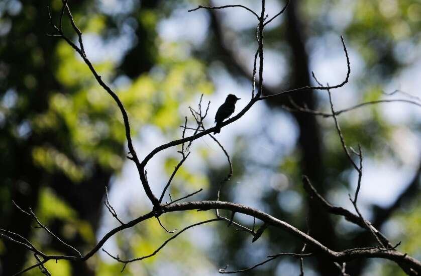 Iowa Photo: Birding with fresh eyes