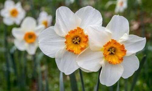 August gardening maintenance tips