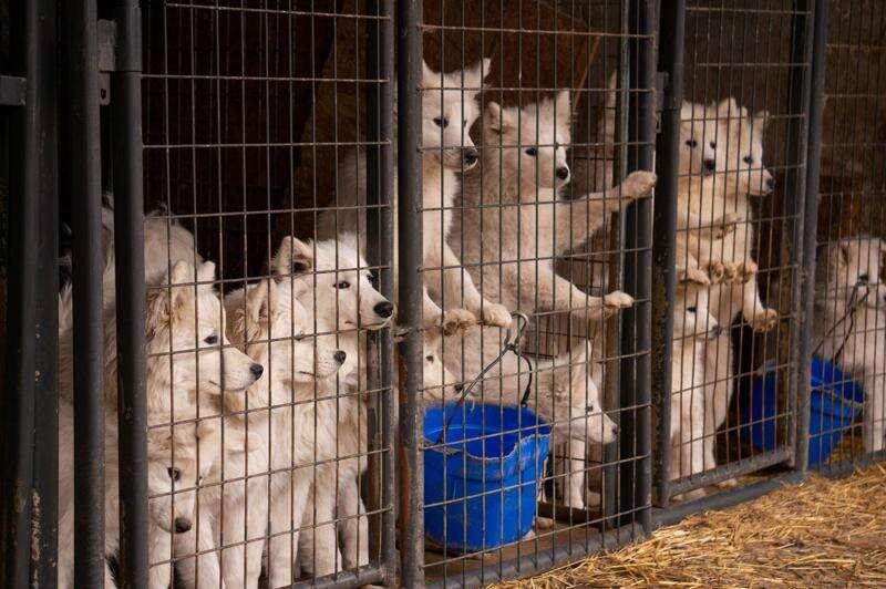 Iowa ranks third worst for problem 'puppy mills,' Humane Society report says