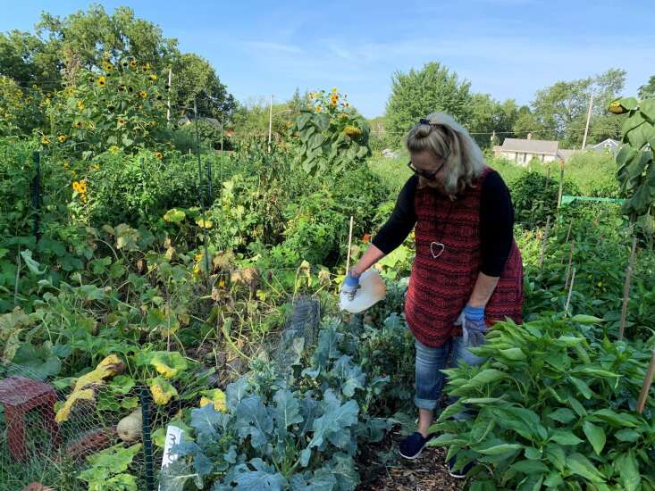 Iowa City Senior Center offers free produce from Give Back Garden