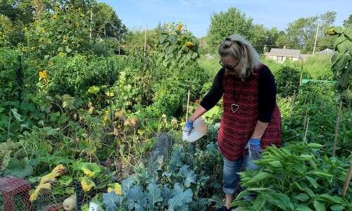 Iowa City Senior Center offers free produce from new garden