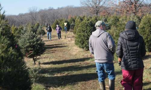 Pick your own Christmas trees at these Eastern Iowa farms