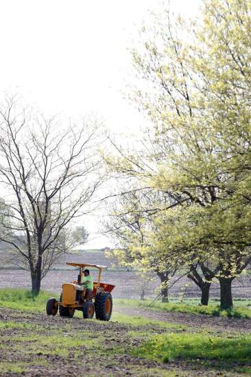 Linn County to create better habitat for the butterflies, other pollinators