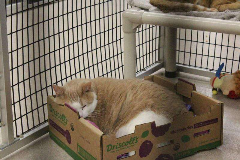 Animal shelters adapting to COVID-19 changes