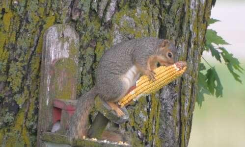 Squirrel feeder attracts a little friend