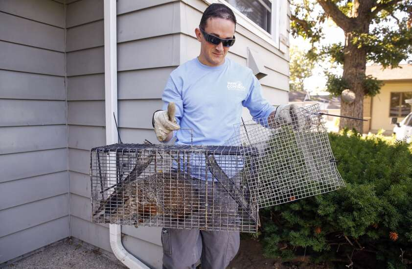 Is it bigger than a bug? Call Paw Control in Hiawatha for nuisance critters
