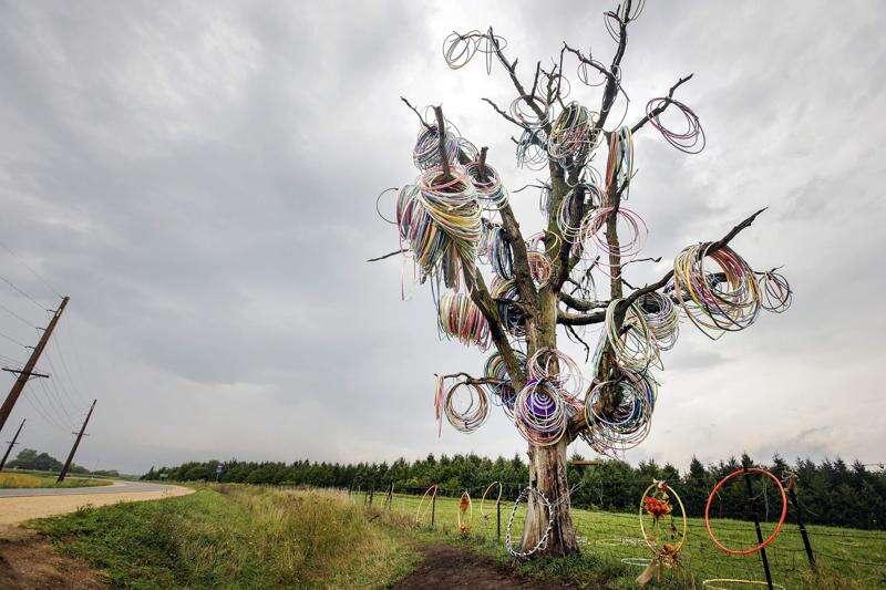 Iowa's beloved 'Hula-Hoop Tree' could be cut down