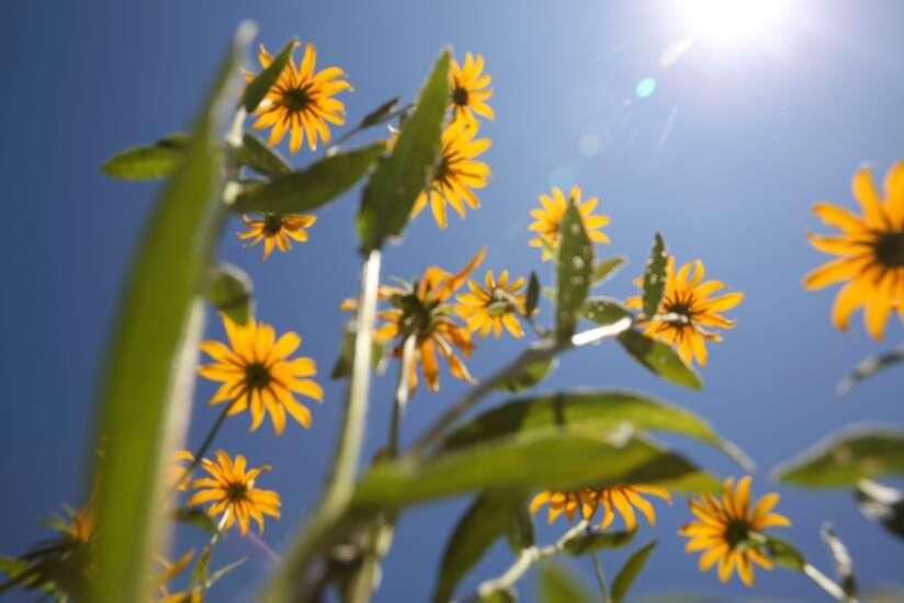 The Iowa Gardener: Gardening in a drought