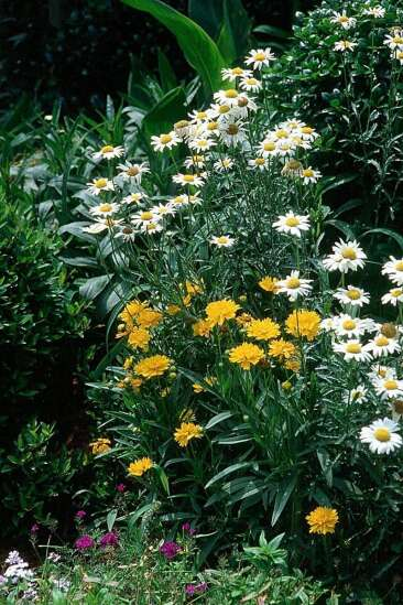 Keep watch for invasive plants