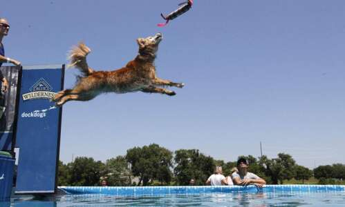 Photos: Dogs chill in style out at Dock Dogs competition