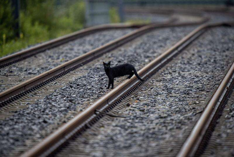 Are black cats bad luck? And other Halloween omens and superstitions