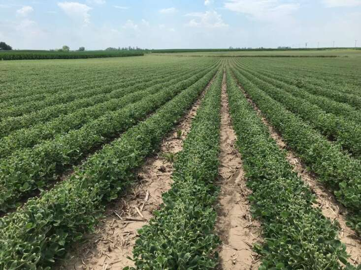 Dicamba damage in Iowa 'most extensive' in decades